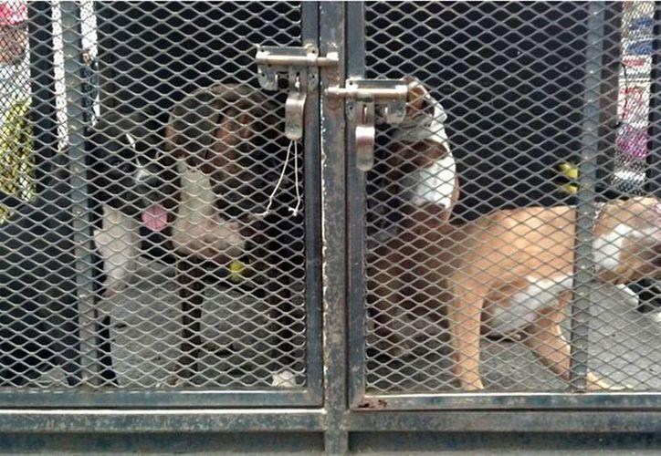 Los canes se encuentran en un centro antirrábico. (Notimex)