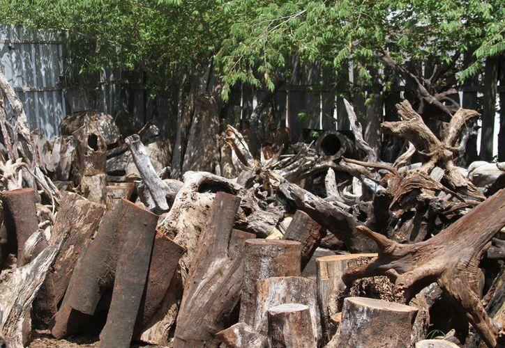 Los ejidos mantienen un buen uso de los recursos maderables. (Adrián Barreto/SIPSE)