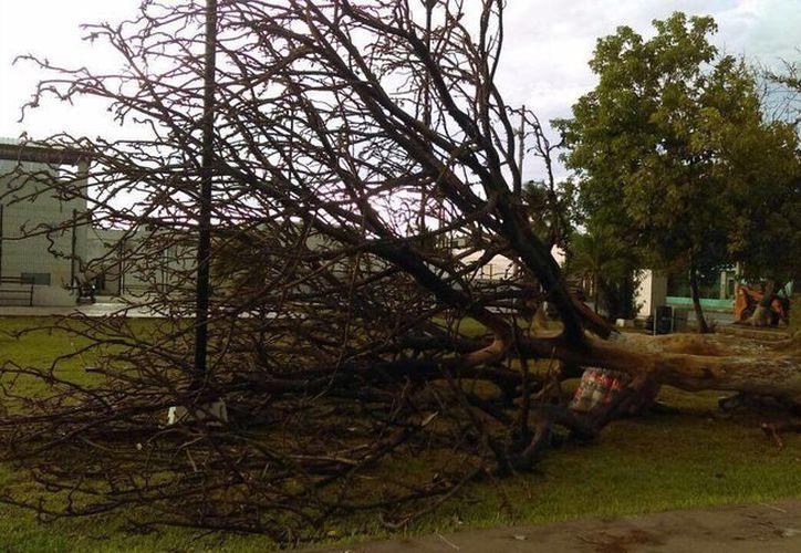 En el surponiente de Mérida se registraron caídas de árboles, además de grandes cantidades de agua. (Ana Hernández/ Milenio Novedades)