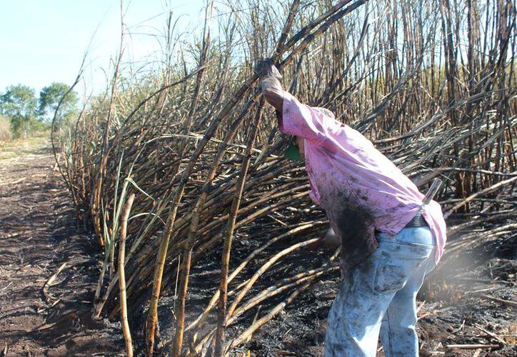 El estado requiere de apoyos que lleguen en tiempo y forma y no después de que los períodos de cultivo y cosecha hayan concluido.