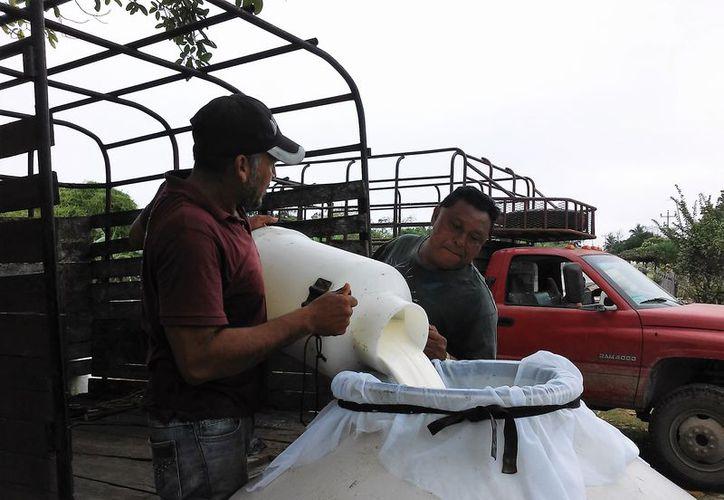Productores de la localidad aseguran que anteriormente comercializan entre 300 y 400 litros al día. (Javier Ortiz/SIPSE)