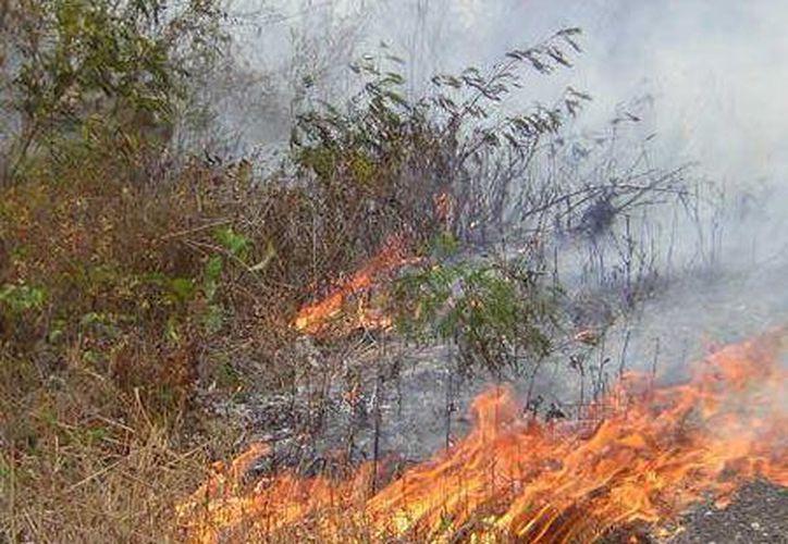 Hasta el momento no se registra ningún incendio activo en el municipio. (Manuel Salazar/SIPSE)