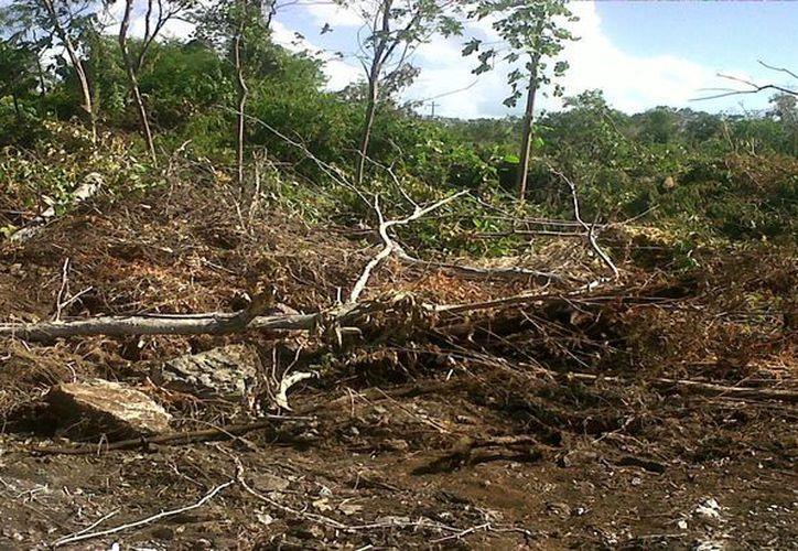 El predio del presunto ecocida devastó flora protegida y por el cual ha sido denunciado ante las autoridades federales. (Juan Palma/SIPSE)