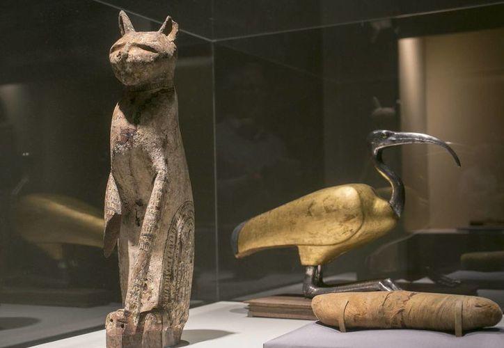 Las momias que se exhiben en el Museo Bowers son de gatos y perros, pero también de aves, cocodrilos y serpientes. (Agencias)