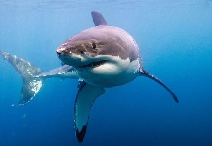 Pescador tuvo un encuentro con un enorme pescador blanco en las costas de Florida. (Foto: Contexto)