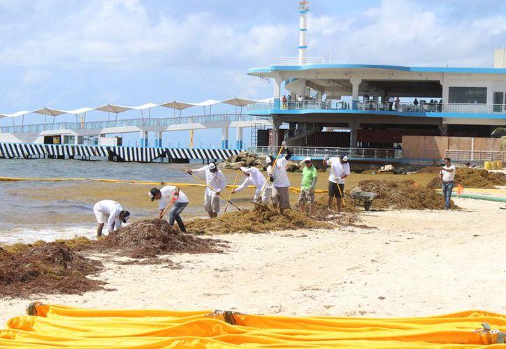 """Cerca de 10 trabajadores de Ar-co quitaron a mano las algas que violaron al """"primer anillo"""" . (Adrián Barreto/ SIPSE)"""