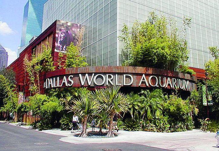 La ciudad de Dallas tiene algo especial que ofrecer como el Acuario Mundial. (Contexto/Internet)