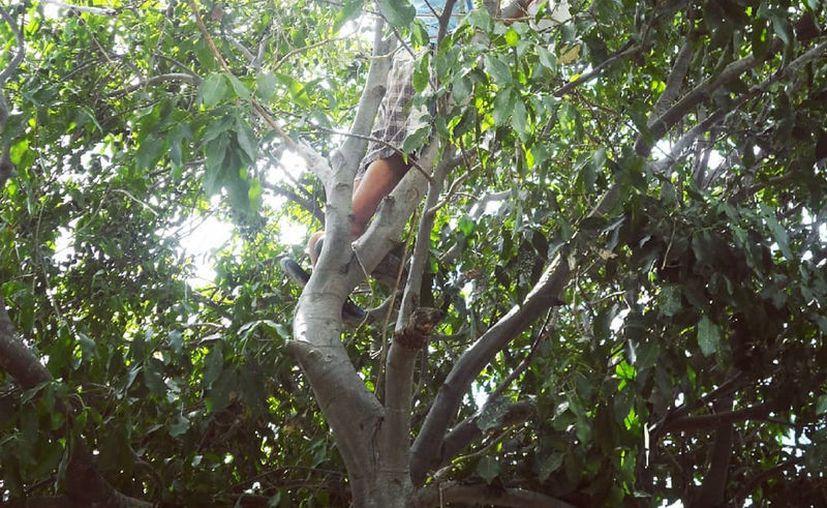 El sujeto se había subido a un árbol de huaya para quitarse la vida. (Foto de contexto)