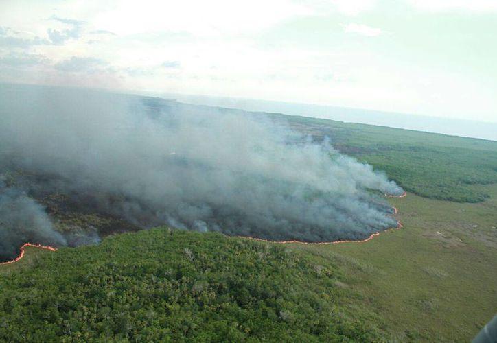 Las condiciones del terreno han dificultado las labores del Ejército Mexicano para controlar el incendio en la reserva ecológica de Dzilam de Bravo. (Jorge Acosta/ Milenio Novedades)