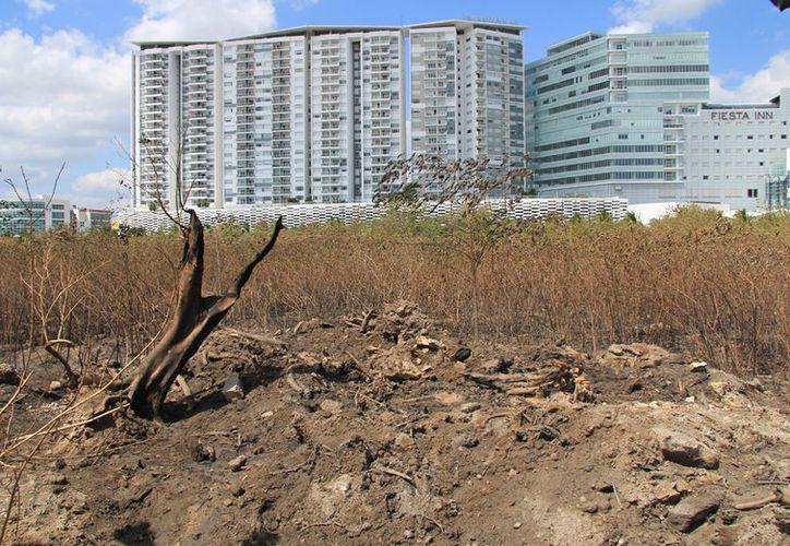 El incendio afectó una superficie de más de dos hectáreas. (Luis Soto/SIPSE)