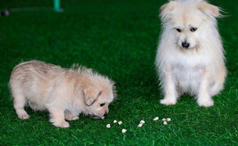 Guozhi era un perro callejero, pero fue adoptado hace nueve años. (Foto: Contexto/Internet)