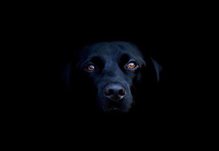 Cuenta la leyenda maya que el perro 'boox peek' reencarna cada cierto tiempo y sigue habitando dentro de cementerios. (Milenio Novedades/Foto de contexto)