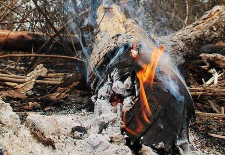 Los apoyos serán retirados a quienes provoquen los incendios en sus predios. (Edgardo Rodríguez/SIPSE)