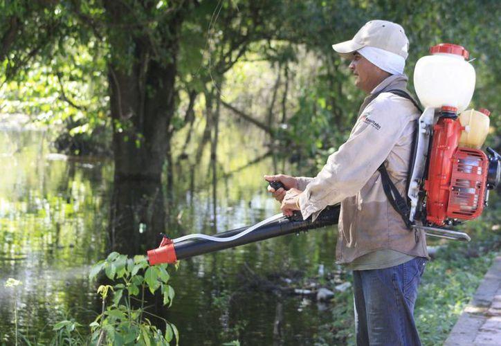 Brigadistas aplican químicos para eliminar los criaderos de moscos. (Harold Alcocer/SIPSE)