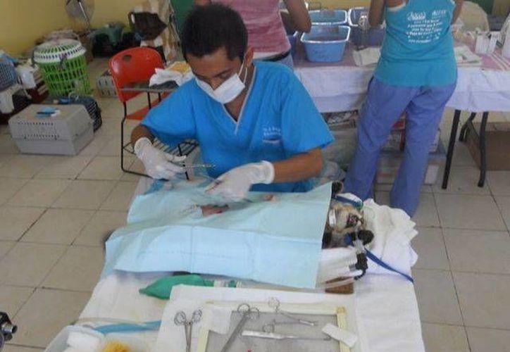 Las esterilizaciones que se han ofrecido en el Cebiam tiene el objetivo de controlar la población canina en Playa del Carmen. (Redacción/SIPSE)