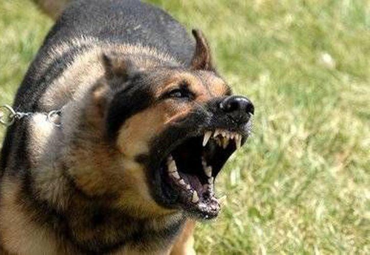 La dueña de los perros pasó una semana en la cárcel. (www.perrosycachorros.net/contexto)