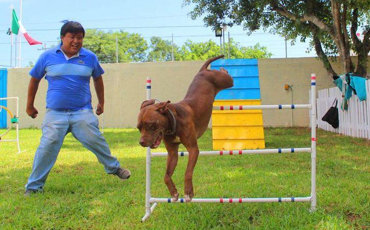 Playa del Carmen ya cuenta con una escuela de adiestramiento canino. (Octavio Martínez/SIPSE)