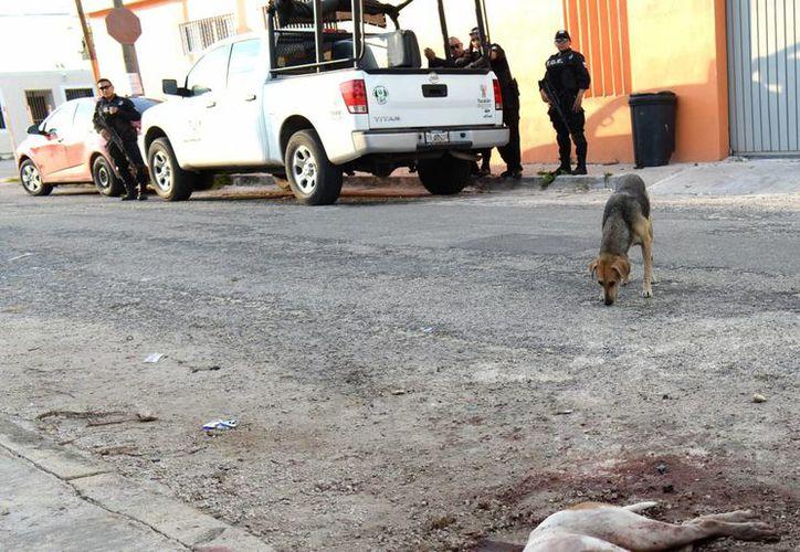 El caso de los perros macheteados ocurrió a principios de noviembre de 2015 en el fraccionamiento Juan Pablo II-Nora Quintana.(Archivo/SIPSE)
