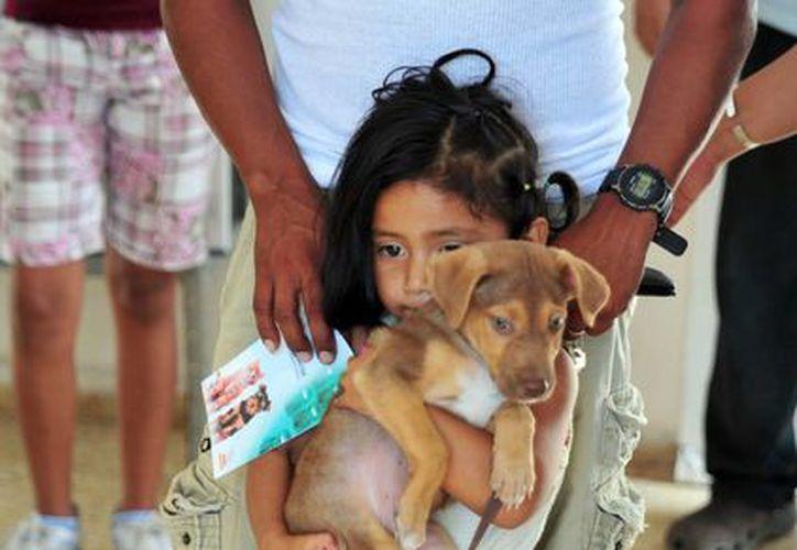En los últimos dos meses el CAC ha dado en adopción 50 canes. (Tomás Álvarez/SIPSE)