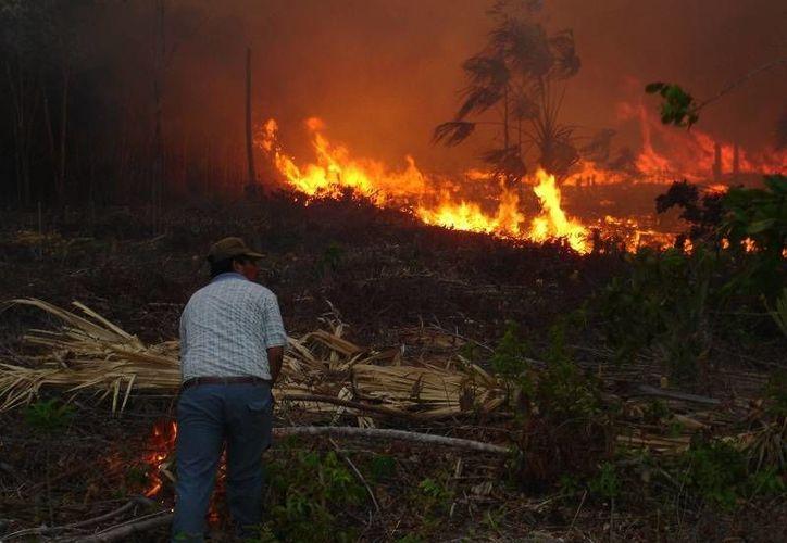 Se encuentran activos por lo menos 19 incendios forestales en el estado. (Edgardo Rodríguez/SIPSE)