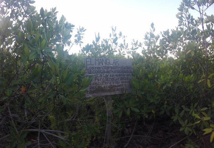 Quintana Roo es una de las entidades que cuenta con una vasta riqueza de flora y fauna. (Redacción/SIPSE)