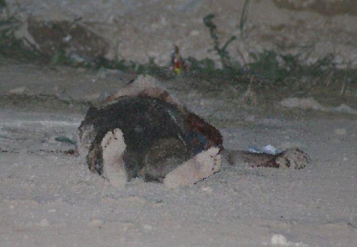 Un hombre que se robó una bicicleta encontró la muerte a pedradas en Kanasín. (Fotos: SIPSE)