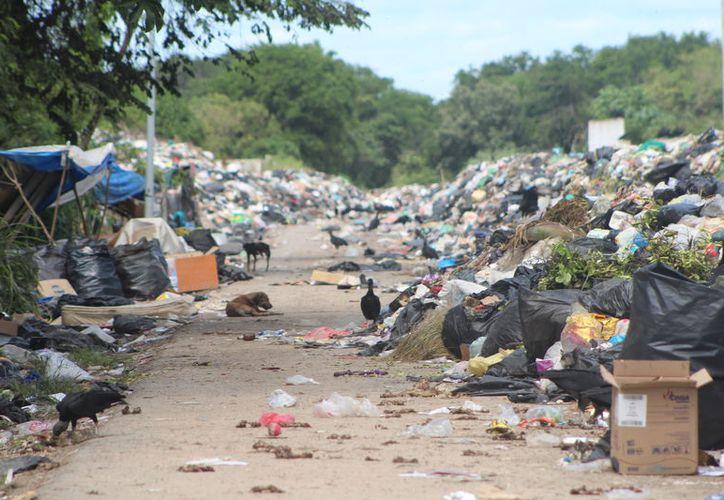 Hasta el momento no se ha dado a conocer un plan para hacer frente a la multa por el mal manejo de la basura en el municipio de Othón P. Blanco. (Daniel Tejada/SIPSE)