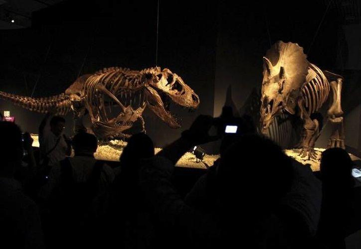 Estos gigantes animales prehistóricos evolucionaron gracias a que la fuerza de la gravedad era casi la mitad que la actual. (Archivo/AP)