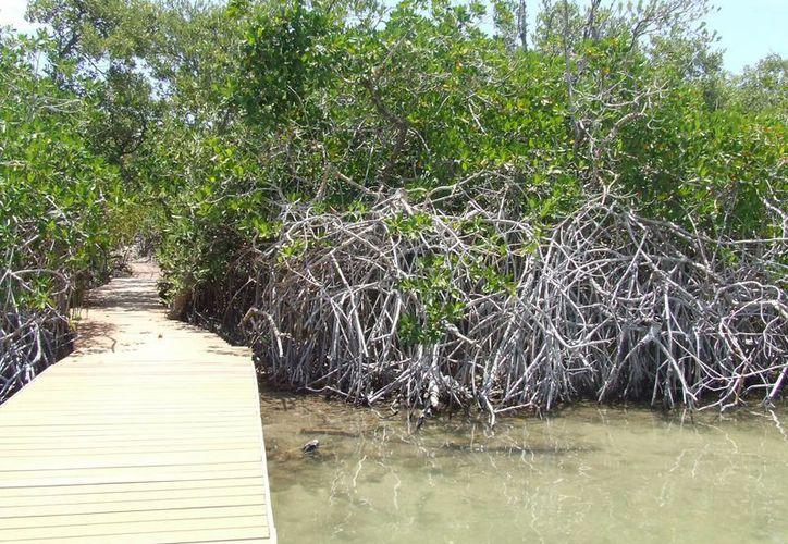 Asociaciones Civiles denuncian contaminación de Punta Piedra por vertimiento de aguas negras. (Rossy López/SIPSE)