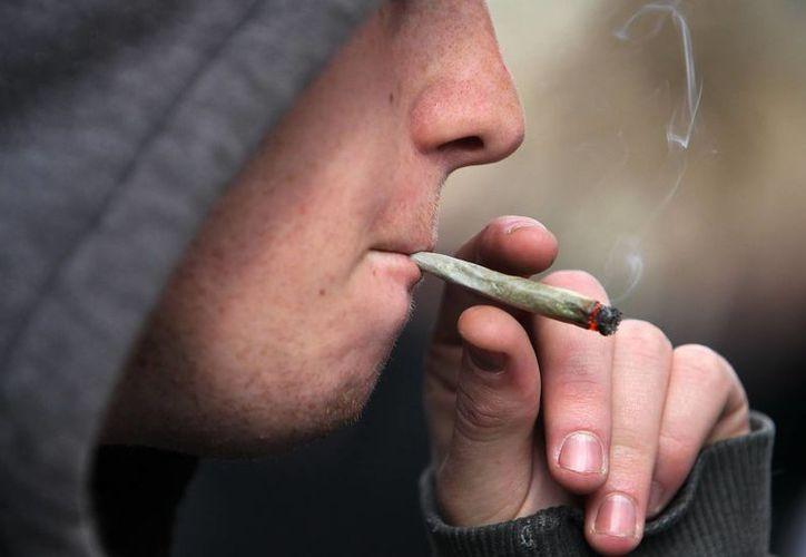 La ley permite la compra de hasta 40 gramos mensuales de marihuana en la red de farmacias. (Archivo/EFE)