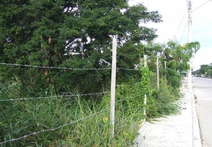 Los predios baldíos en Tulum aquejan a los habitantes de dicho municipio. (Rossy López/SIPSE)