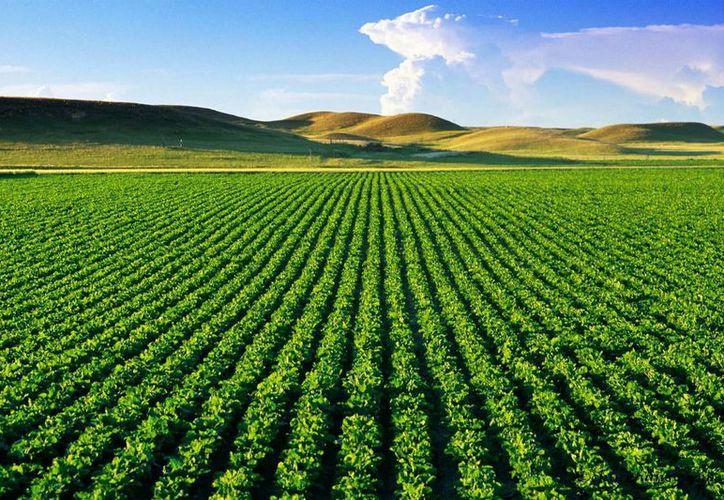 Las cabañuelas era utilizado por los agricultores para poder sembrar en un buen tiempo. (Tierra Fertil)