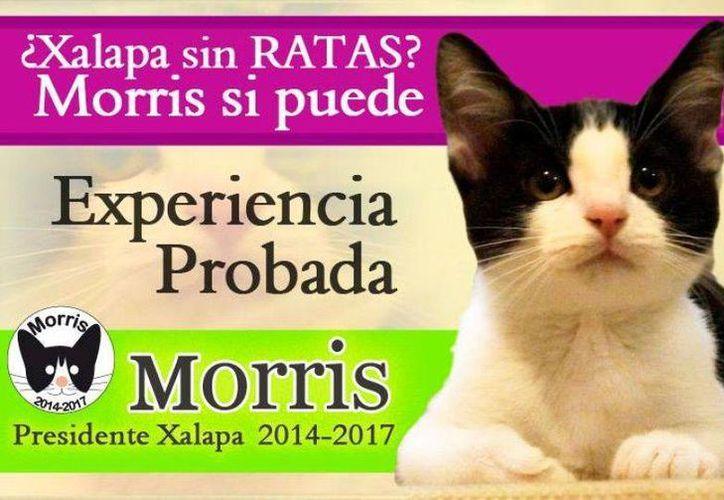 Gato para edil de Xalapa supera en Facebook a candidatos oficiales. (Internet)