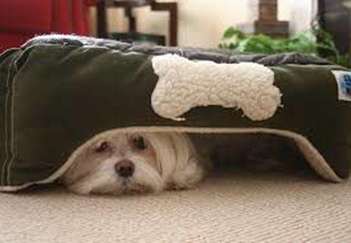 El daño que sufren las mascotas por los cohetes no sólo puede ser físico, ya que también se afecta su salud emocional.