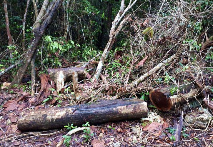 Aseguran que el desmonte en la zona ejidal para hacer un camino es ilegal y ecocida. (Foto: Gustavo Villegas)