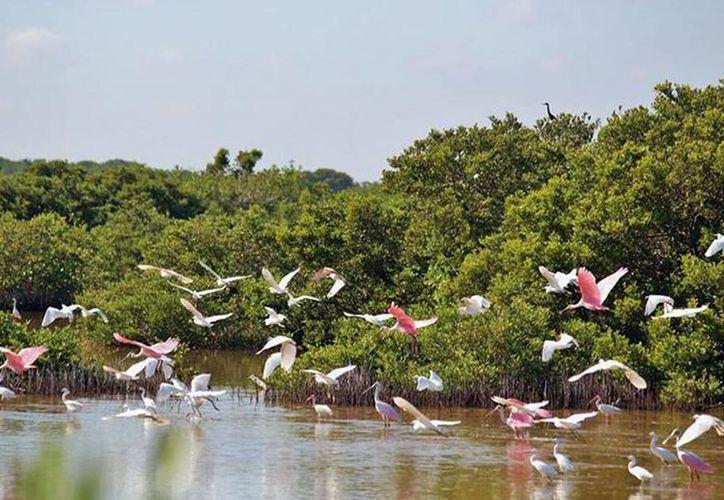 """Los sitios de procesamiento de pepino de mar estaba en el Área Natural Protegida Reserva Estatal """"Bocas de Dzilam"""", en Dzilam de Bravo, Yucatán. (Facebook/Profepa)"""