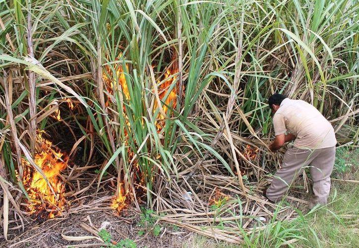 """El método de preparación de la tierra """"roza, tumba y quema"""" contribuye a deforestación de las selvas quintanarroenses. (Edgardo Rodríguez/SIPSE)"""