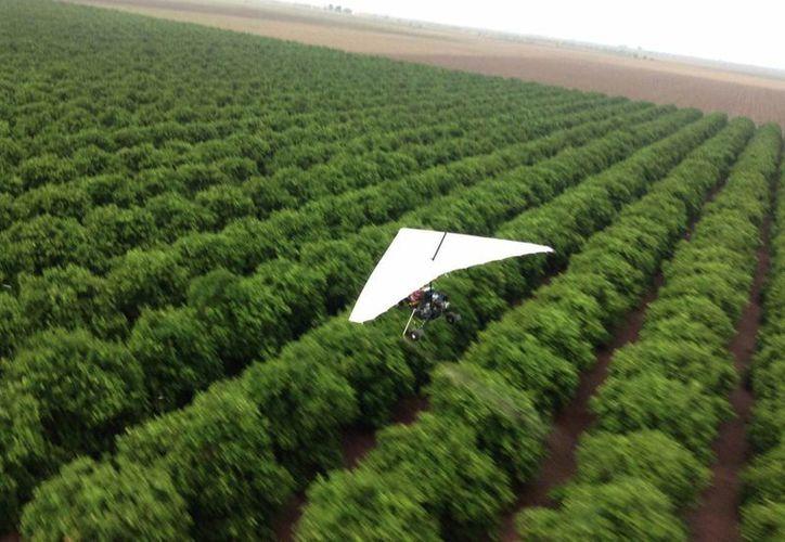 La Secretaría de Agricultura indicó que el campo avanzó en los primeros meses del año un 2.8 por ciento. (Archivo/Notimex)