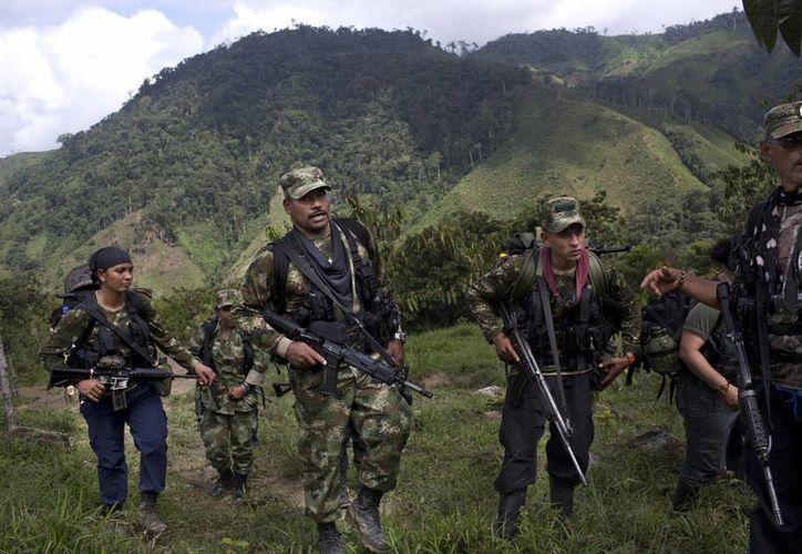 Muchos guerrilleros de las FARC han encontrado una familia en sus compañeros de armas, con quienes han convivido por décadas en las entrañas de las montañas colombianas. (AP)