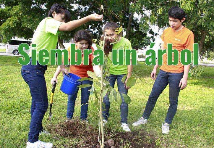 Meridanos aseguran que se deben poner manos a la obra y ayudar al medio ambiente sembrando un árbol. (Especial)