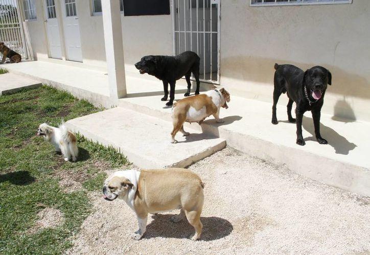 Pet Garden brinda hospedaje a mascotas cuyos dueños no pueden atenderlas. (Tomás Álvarez/SIPSE)
