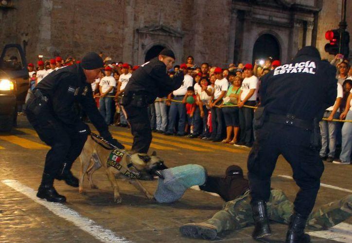 La Policía estatal cuenta con agentes caninos (foto),  por lo que la PMM tendrá con su propio equipo. (Milenio Novedades)