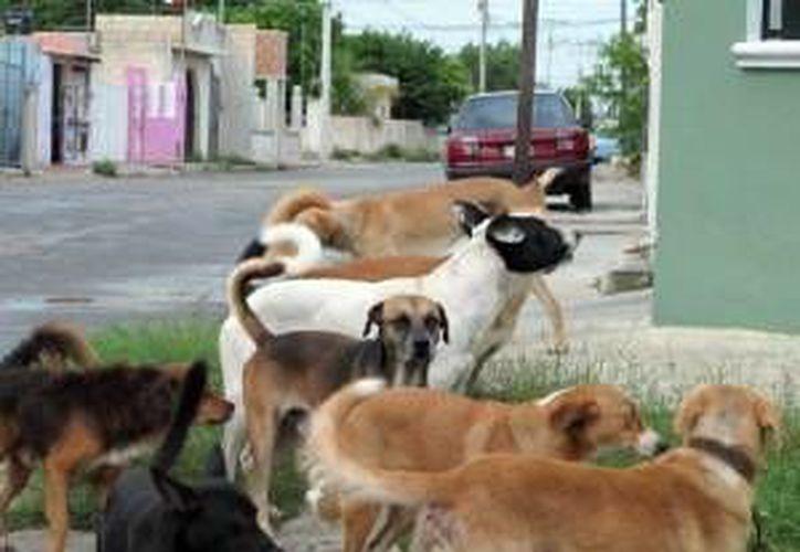 El Congreso local penalizó la crueldad contra los animales. (Milenio Novedades)