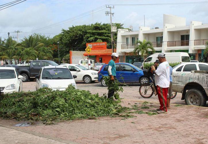 Los vientos de Earl durante la madrugada derribaron algunas ramas en Tulum. (Sara Cauich/SIPSE)