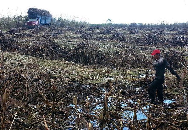 Los terrenos se encuentran en pésimas condiciones por las lluvias. (Edgardo Rodríguez/SIPSE)