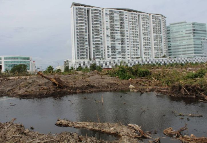Reforestar la zona de Malecón Tajamar tardará 20 años o más. (Luis Soto/SIPSE)