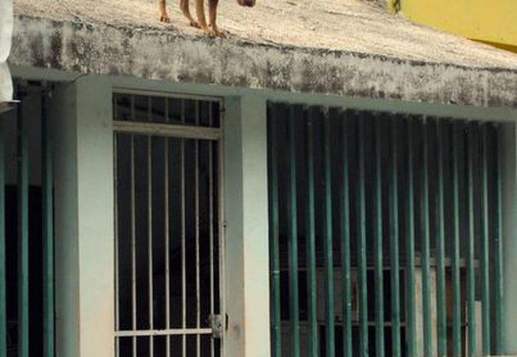 Durante el evento se proporcionará información sobre cómo denunciar la Ley de Reforma de maltrato animal. (Tomás Álvarez/SIPSE)