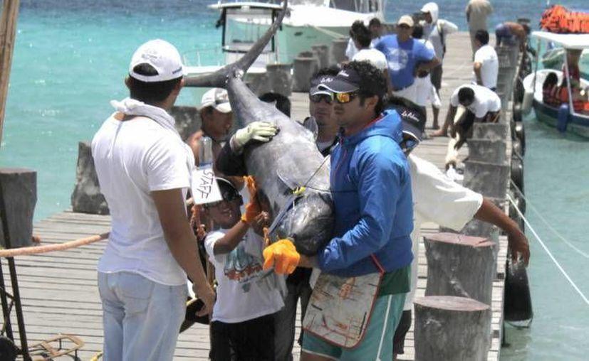La Sagarpa exhorta a quienes deseen realizar algún torneo de pesca deportiva a hacerlo dentro de la legalidad, con permisos y bien informados. (Milenio Novedades)