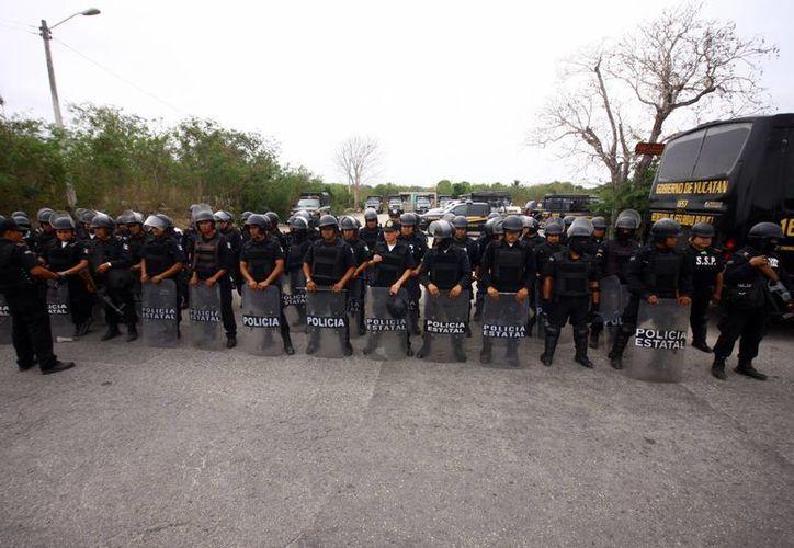 Cientos de elementos de las fuerzas federales y estatales participaron  en el operativo. (SIPSE)