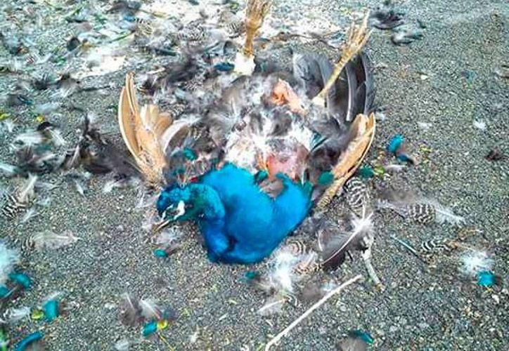 Perros 'domésticos' atacaron a varias aves en el zoológico de Tizimín y mataron por lo menos a seis de ellas. (Oficial)